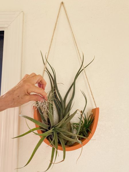 I love this Air Plant cradle. After I soak the Air Plants once a week, I arrange them differently in the cradle every time I put them back. It's a piece of living art! I bought it at a little plant shop in North San Diego County but fortunately they sell on Etsy.   #LTKhome #LTKstyletip #LTKunder50