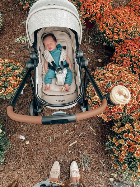 raise your hand if your mums are still alive 🙋🏼♀️mine definitely aren't so here's a pretty fall photo of ones that are & my handsome little guy!  mules & stroller set linked   #LTKshoecrush #LTKbaby #LTKSeasonal