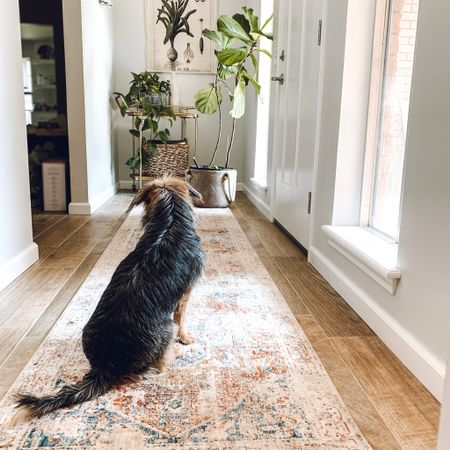 The pups are loving the new runner in the entry way! It's a lot softer to lay on and look out the window than the tile... 😂 Just like the other rooms in the house, everything is slowly but surely coming together!  I've linked my exact rug if you are looking for it!  . . . . . .  Screenshot this pic to get shoppable product details with the LIKEtoKNOW.it shopping app http://liketk.it/2F0Ef #liketkit @liketoknow.it @liketoknow.it.home #LTKhome #LTKunder50 #LTKunder100