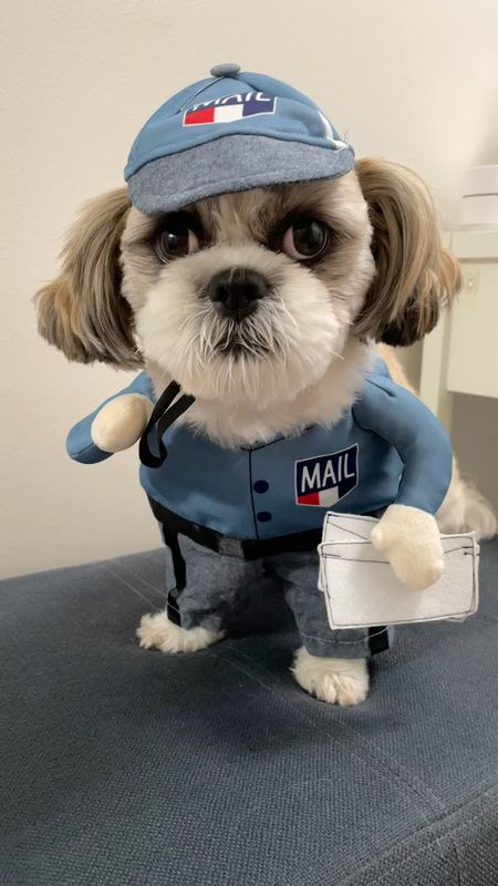 Ralphie took this pet costume in size S. He is a 15 pound male Shih Tzu.   #LTKkids #LTKunder50 #LTKfamily