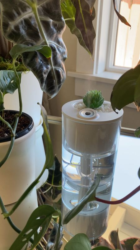 When your plants get crispy tips on the leaves, one cause could be that it needs more humidity. I like this one because it's portable, powered with a usb cord,  affordable (~$20), and cute!   #LTKhome #StayHomeWithLTK #LTKunder50