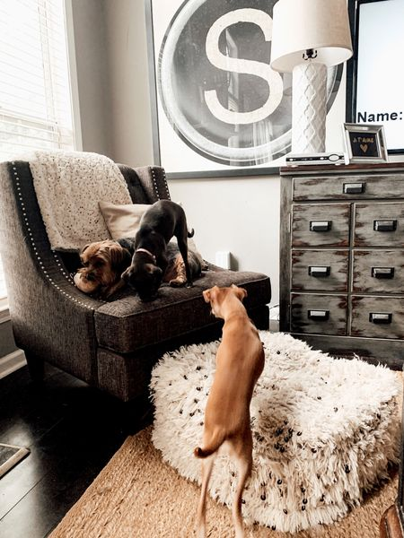 Neutral living room decor for small spaces. Gray club chair from Wayfair. Pottery Barn Jute Floor Rug. Target White Ceramic Lattice Lamp Base. Moroccan Floor Poufs from Amazon Finds. Pet- friendly decor ideas for dog moms.  Shop this pic below. Follow @lindseyandcoco on @liketoknow.it to never miss a deal or a sale. So glad you are here!💗   http://liketk.it/3jeqm #liketkit #LTKfamily #LTKhome #ltkpet #ltkpets @liketoknow.it.home