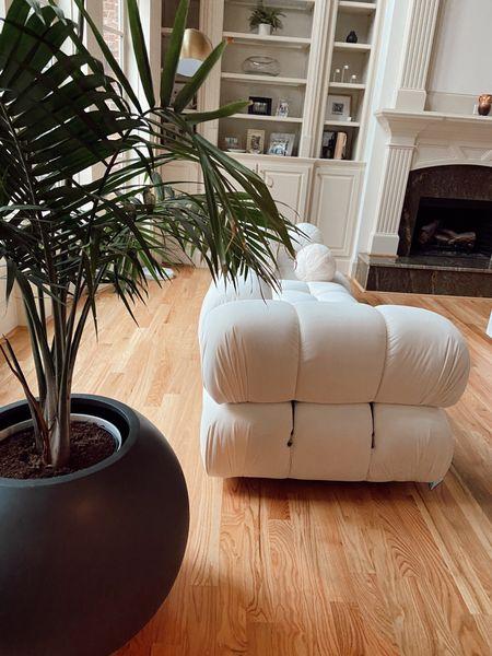 Sofa and planter I love!  #LTKsalealert #LTKhome