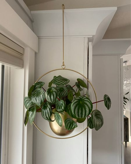 Love how this watermelon peperomia plant looks in gold hanging planter. @liketoknow.it http://liketk.it/2YpEI #liketkit @liketoknow.it.home Follow me on the LIKEtoKNOW.it shopping app to get product details for look and others   #LTKhome #LTKunder50 #StayHomeWithLTK