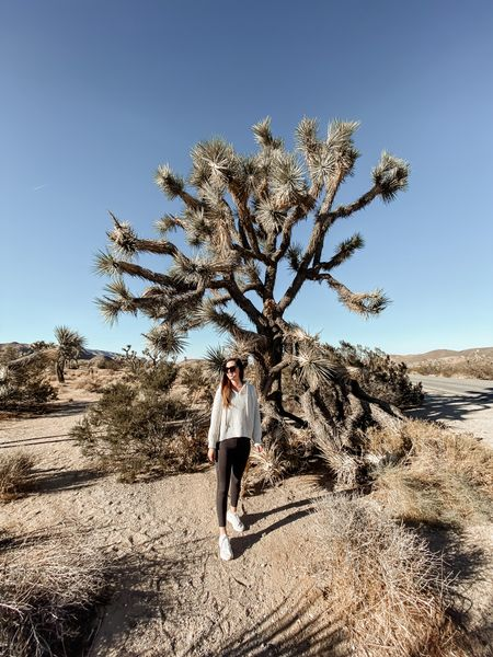 Joshua Tree was one of the many highlights from our Palm Springs trip! I mean have you ever seen such a cool tree?!   •