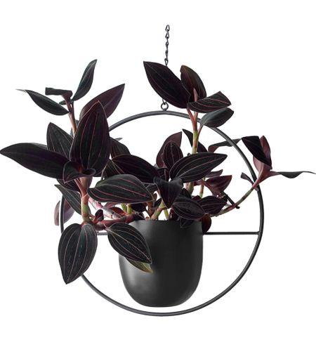 Amazon find Plant Dad - Modern Hanging Planter Pot, Sleek and Minimalist Planter Pot for Indoors, Must-Have Home Decor, Plant Pots Made of Lightweight Materials, Grey  #LTKhome #LTKunder50
