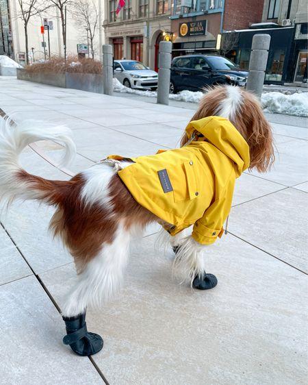 Spring outfit, rain coat, dog clothes, dog boots, city outfit, dog mom, Maxbone    #LTKSeasonal #LTKdog #liketkit @liketoknow.it http://liketk.it/39FTQ