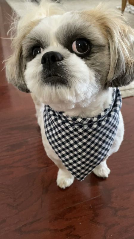 """Love this reversible bandana. It's a thicker material since it's two layers of fabric. Size small is 25"""" long. Ralphie is a Shih Tzu with a 10.5"""" neck so the knot is a bit bigger due to the material but overall it's cute and well made for $8.99 Amazon find.  #LTKunder50 #LTKfamily #LTKstyletip"""