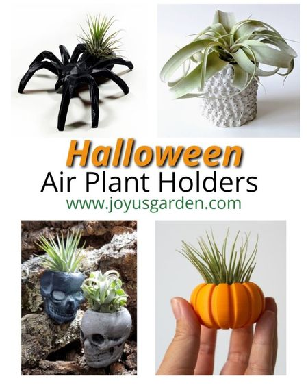 These Halloween inspired air plant holders make the perfect Halloween decor for houseplant lovers. These make great Halloween party gifts or October birthday gifts too! Air plants are easy Care houseplants and look extra adorable in these cute Halloween planters. Halloween decor, Halloween houseplants, Halloween gift, party gift, air plant holder, air plant container, air plant pot, skull pot, skull planter, pumpkin pot, pumpkin planter, spider plant pot  #LTKunder50 #LTKhome #LTKSeasonal