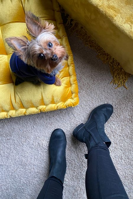 """http://liketk.it/388bC My favorite pair of unfussy """"go with everything"""" boots. True to size - go a half size up if you want to wear thick socks. Comfy enough to wear all day. #LTKshoecrush #liketkit @liketoknow.it Dog not for sale 😉"""