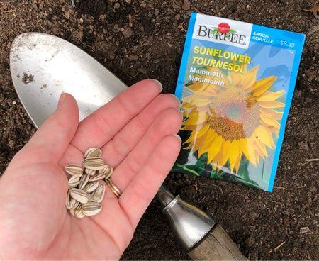 Garden season! We're planting sunflower seeds in the garden  🌻  #garden #sunflower #seeds  #LTKSeasonal #LTKhome