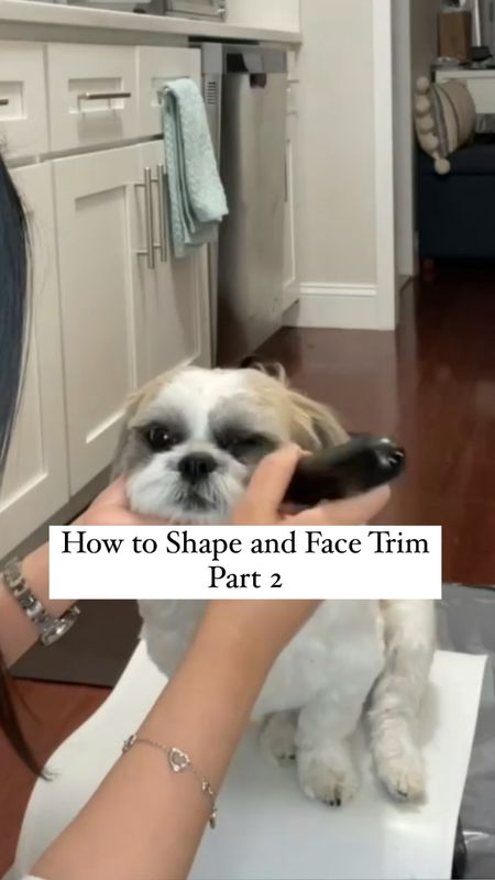 How to trim and shape your dog's face using a mini clipper. The exact clipper I used is linked but it's sold out (Amazon will link similar suggestions).  Step 2 - For the hair around his eyes use Trimming eye hairs can take lot of patience before dog be okay with you being so close their any tools. It got easier more groomed him as he older. also lightly buzz at nose/snout better it (you see me doing this 40 seconds into video clip which only viewable on free @liketoknow.it shopping app). Video was sped up Actual time: 6 minutes Dog grooming tips  #LTKfamily #LTKkids #StayHomeWithLTK