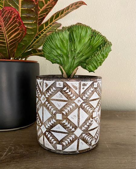 I finally found the perfect plant to put in this geometric embossed pot, my new coral cactus! The pot has a drainage hole and is under $20! @liketoknow.it http://liketk.it/2TyuR #liketkit #StayHomeWithLTK #LTKhome #LTKunder50