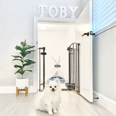 Happy #NationalDogDay 🐶✨ Loving my pets cute home. He's got his own gated dog house set up including a Tee Pee and his own Fig Tree Artificial Plant. He is stylin!    http://liketk.it/2Vjws #liketkit @liketoknow.it #StayHomeWithLTK #LTKunder50 #LTKhome @liketoknow.it.family @liketoknow.it.home Shop your screenshot of this pic with the LIKEtoKNOW.it shopping app