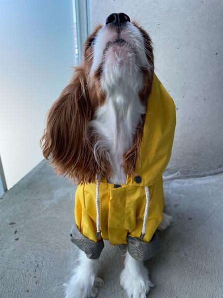 Maxbone Labor Day Sale!  Get a FREE dog raincoat with any order over 100$ Use code  ✨ BYESUMMER ✨   #LTKfamily #LTKSeasonal #LTKsalealert