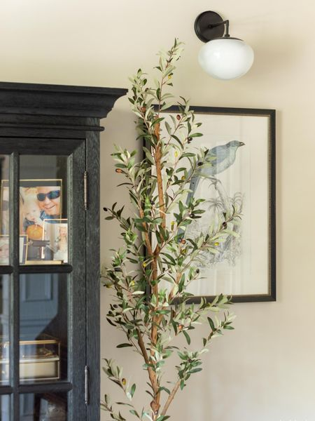 This faux olive tree is the perfect addition to my conversation room and the price can't be beat! Now 25% off (plus free shipping) for the Memorial Day sale!   http://liketk.it/3eGXk #liketkit @liketoknow.it #LTKhome #LTKstyletip home decor artificial tree black curio cabinet gold picture frame sconce bird print conversation room decor Memorial Day sale faux tree faux plant