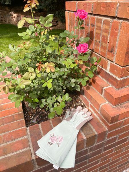 New rose gloves! 🌿 @liketoknow.it http://liketk.it/3hfZm #liketkit #LTKhome #grandmillenial #gardening
