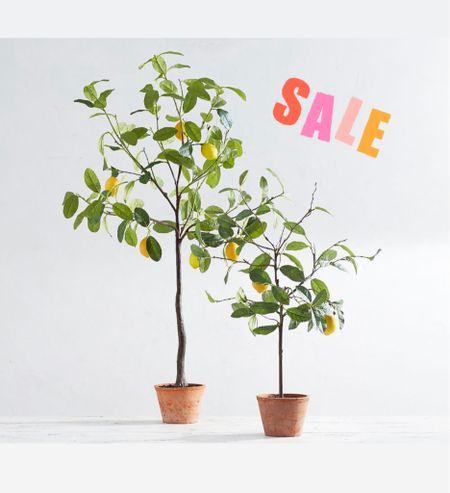 These faux lemon trees are on sale!  Home decor kitchen living room  #LTKunder100 #LTKsalealert #LTKhome