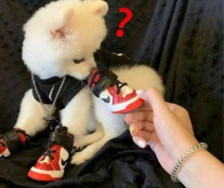 Cutest little doggy shoes   #LTKunder100 #LTKfamily #LTKfit