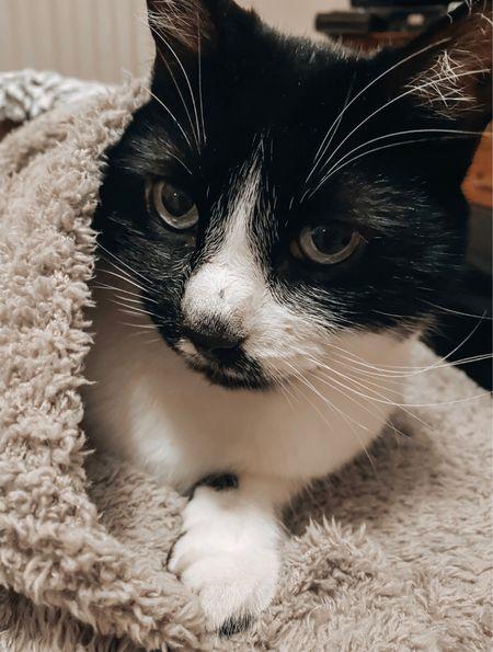The Barefoot dreams blanket is SO cozy… our cat has claimed it 🤣.   Nordstrom sale, Nordstrom finds  #LTKhome #LTKsalealert #LTKunder100