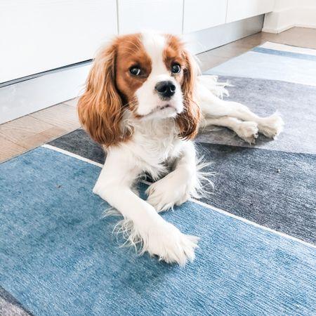 Dog-friendly area rug, machine-washable, living room, puppy friendly, dog mom must have, ruggable #LTKhome #LTKfamily #LTKdog #liketkit @liketoknow.it http://liketk.it/38D4V