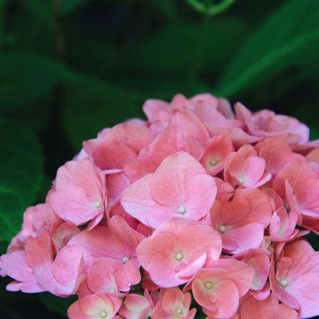 Flower garden 🌸 plant love #flowergarden   #LTKSeasonal #LTKhome