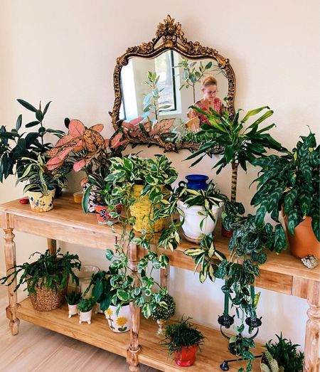 Looking for a beautiful and functional way to display your collection of houseplants? This table from World Market works perfectly and fits all my favorite plants.   #LTKhome