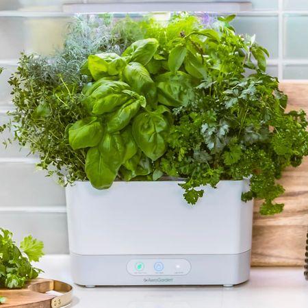 Grow herbs year round!   #LTKsalealert #LTKfit #LTKhome