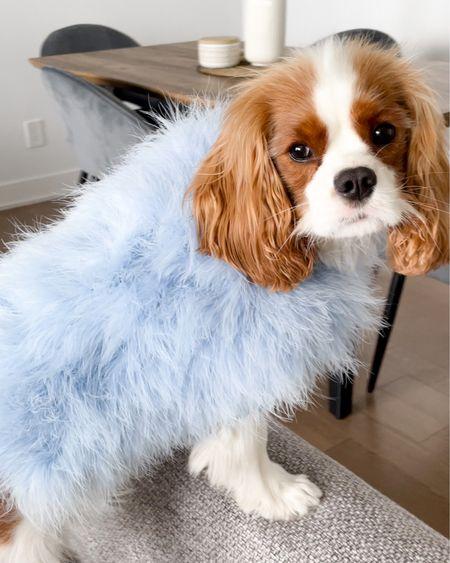 Maxbone x Christian Cowan Iconic Jumper. Dog Fashion. Maxbone Best-Sellers are 15% off with code HENRY 🛍     http://liketk.it/3ipkV #liketkit #LTKhome #LTKstyletip #LTKdog @liketoknow.it