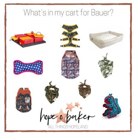 Because Bauer deserves the best!!   #LTKdog