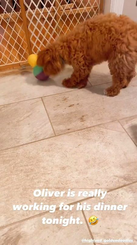 Puppy, dog toy, pet toys, goldendoodle,   #LTKfamily #LTKhome #LTKSeasonal