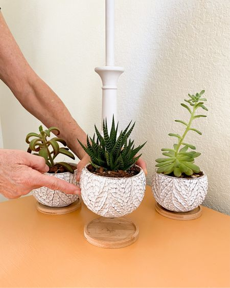 This mini succulent pot trio is so adorable and the perfect size for small succulents. I love the way my succulents look in these white, cement pots. They also come with trays to help catch extra water. Succulent pots, small pots for succulents, succulent, small houseplant pot, indoor succulents, little plant pot.   #LTKstyletip #LTKhome