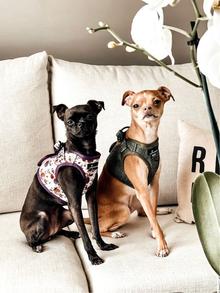 """Fall Dog Harnesses and Accessories from Cavology.  The Tea Rose Step-In Harness and Matcha Step-In Harness from Cavology.  www.cavology.com  Plus save 10% when you shop Cavology and use code """"LINDSEYANDCOCO.""""  Pottery Barn Sectional. Pottery Barn Inspired. #potterybarn   #LTKhome #LTKunder50 #LTKSeasonal"""