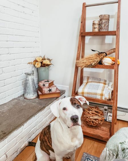 My dog doesn't know what to do with himself. We are currently redecorating and taking over all of his favorite spots. He wakes up and finds new things every morning and quickly readjusts. Welcome to the Sweeney household! This is it, Tucker!! This is it! Lol! . . Going for a full blown #farmhouse vibe in our #diningroom and taking our time choosing our pieces. Want to spend wisely but still get it right. Documenting our journey #ontheblog along the way.  . . So far, we've painted, redid our fireplace, gotten rid some furniture, bought two pieces, and are now on the hunt for a new dining room table. That is the hardest part! I cannot find a set I like!  Where did you get yours?!  . .  http://liketk.it/2G0Fd #liketkit @liketoknow.it #LTKunder100 #LTKunder50 #LTKhome