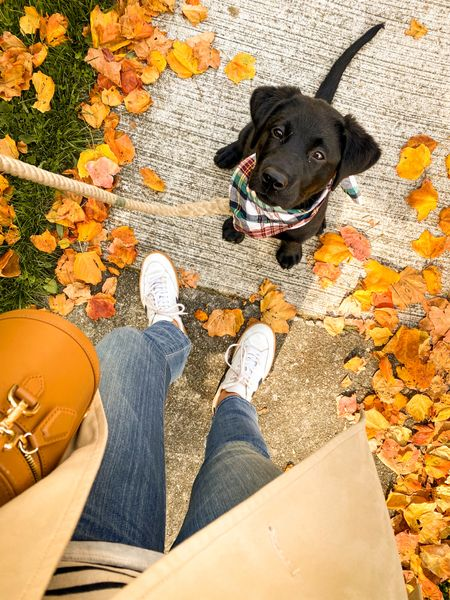 Linking some of my favorite sneakers for fall! 🍂 #fallsneakers #sneakers #veja #casualstyle
