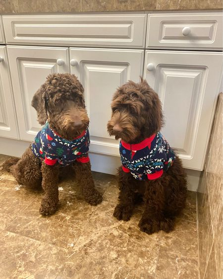 Holiday sweaters for my labradoodles! These are super lightweight so my puppies won't get hot. AND they match our holiday matching Christmas pajamas! http://liketk.it/30lzA #liketkit @liketoknow.it #puppy #labradoodle #pajamas #christmaspajamas #matchymatchy #matchingoutfits #matchingpajamas #christmas