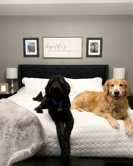 I made the bed to snap pics of our beautiful new comforter and they immediately jumped on the bed 🤣. We've lived here almost a year and half and we're just now started to chip away at decorating.  What's your favorite room in the house to decorate? #LTKhome #LTKsalealert #LTKstyletip #amazon #bedding #bedroomdecor #whitebedding #whitecomforter #whitequilt http://liketk.it/3btJi #liketkit @liketoknow.it @liketoknow.it.family @liketoknow.it.home