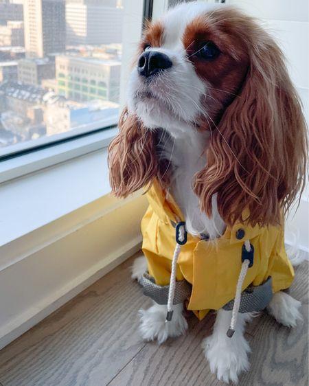 Raincoat, dog clothes, spring outfit, dog mom. Use code HENRY for 15% Maxbone.    #liketkit #LTKSeasonal #LTKunder50 #LTKdog @liketoknow.it http://liketk.it/38D1S