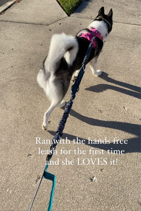 Maya needs a lot of exercise & she's loves to run! My back would really hurt after running with her on her normal leash. I found this hands free leash and it's a game changer! The elastic portions really take the strain off her pulling (she is meant to pull sleds). You and your furry friend will love this! 🏃🏻♀️🐾 http://liketk.it/2Y1FV @liketoknow.it #liketkit #LTKunder50 #LTKunder100 #LTKfit
