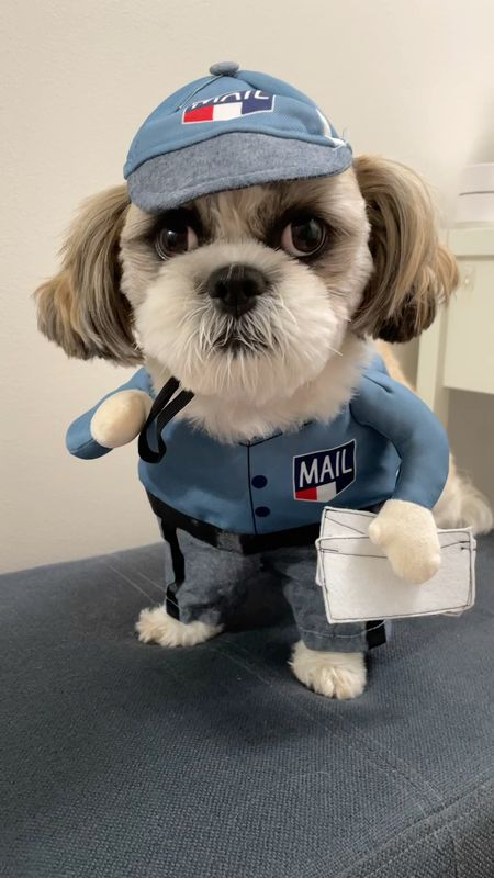 Ralphie took this pet costume in size S. He is a 15 pound male Shih Tzu.   #LTKkids #LTKfamily #LTKunder50