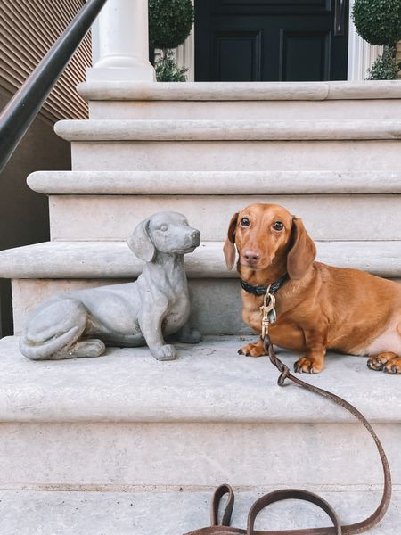 """Serious question, though: Should we name him """"Snoodle"""" (Stone Noodle) or """"Concroodle"""" (Concrete Noodle)? 🌭 http://liketk.it/3jHhJ #liketkit @liketoknow.it"""