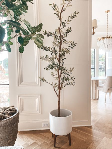 Olive Tree on sale today only 30% off with code TREAT   #LTKhome