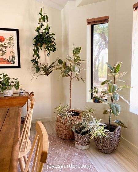 Floor baskets for houseplants add such a cozy feel to any home. These are some of my favorite plant baskets. Indoor plant basket, floor basket, plant basket, large basket, large decorative baskets.   #LTKstyletip #LTKhome