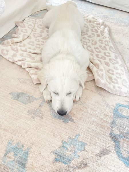 Get a baby sized Barefoot Dreams for your puppy and they will sleep through the night 🤣  #LTKstyletip #LTKhome #LTKunder100