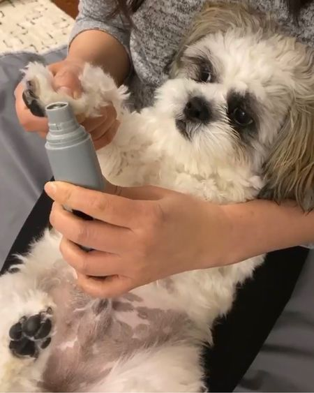 At Home Pet Grooming - I'm obviously not a professional and learned how to groom our shih tzu at home by trial and error. I am using a nail grinder on @hi.ralphie (video clip is saved to the 'Grooming' IG stories highlights on his Instagram account). Young pups hate getting their paws handled so be patient! The more you do it the more tolerable it is for the both of you. You can also do little by little such as one paw a day or even one nail a day. Once your pup realizes they are not being harmed by this weird buzzing/vibrating device they will trust you to handle their paws. I also linked to a tiny clipper from Amazon I use to trim the fur between his paw pads. The first time was a learning experience since I never used clippers before and I shaved too much fur around his paws so he looked like he had fingers. 🤦🏻♀️ I always trim the fur around his paws with rounded scissors (also linked) first and then I go in with the tiny clipper on the lower setting (without the guard since the tiny clipper is not very powerful). It honestly takes a lot of time and patience but now Ralphie lets me get all the hair inbetween his paws and grind his nails versus manually filing his nails.  @liketoknow.it http://liketk.it/2LXcq #liketkit #LTKhome #LTKfamily #LTKunder50