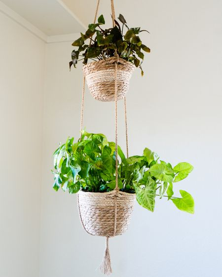 """I like this basket because it's lightweight & goes with the natural vibe of my home. It holds a 6"""" plant on the top & an 8"""" plant on the bottom. My Arrowhead Plants love it!   #LTKstyletip #LTKhome #LTKSeasonal"""