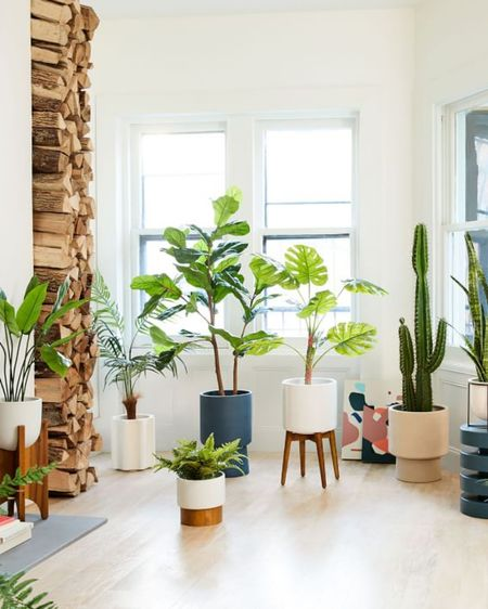 Growing up, faux plants were so bad. Seriously, the pits! You could spot them and their dust-collecting leaves from a mile away. But now, it's a totally different story. Faux plants have stepped up their game! My favorite? Faux Fiddle Leaf Fig trees, succulents and Faux Olive Trees. Faux plants are a really great alternative to real plants if you live in a low-light house, have kids or pets that tend to get into things or if you travel/work/AirBnB a lot. I have faux plants in my house and they add pops of life without any hassle. I've rounded up my favorite faux trees so you can bring that hassle-free greenery into your life. 🍃 🌳 http://liketk.it/2JLzv #liketkit @liketoknow.it