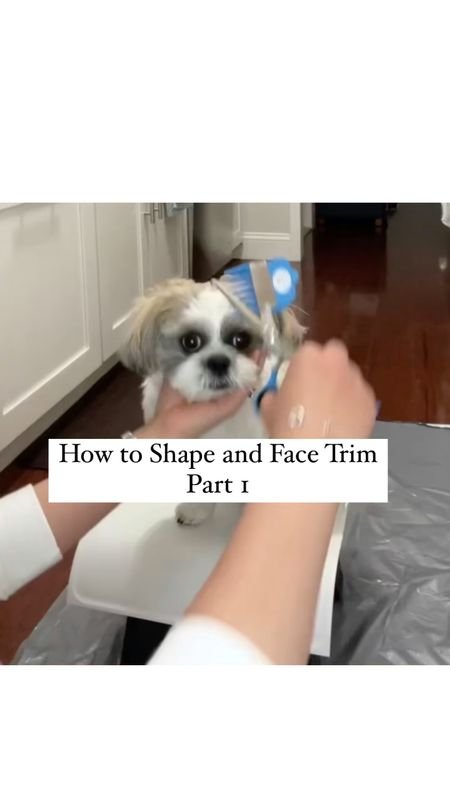 Step 1 - I used the # 3 clipper that came with Scaredy Cut cat and dog grooming shears. follow his face shape as shown in video clip (only viewable on free @liketoknow.it shopping app).    Video was sped up  Actual time: 5 minutes 30 seconds   ❗️An important personal safety note about Shears: The instructions say to hold locks of fur you want cut but don't have to. Note better access under front hind legs (you could call them doggy arm pits) gently pull loose skin order trim tricky area. stopped pulling at bunches recommended because would myself way whenever went too fast (I often knicked my nails if didn't move fingers enough). Lastly, be very cautious when trimming around your dog's ears private area especially they are intact (not neutered)!!!   http://liketk.it/37atk #liketkit  #StayHomeWithLTK #LTKfamily #LTKkids