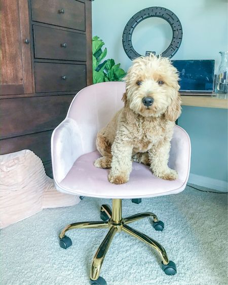 Home office inspo 💕 Love my velvet office task chair. In combo with the potted foliage 🌿, this room is really coming along. http://liketk.it/2WkI4 #liketkit @liketoknow.it #StayHomeWithLTK #LTKhome   P.S. Our goldendoodle Simba is so spoiled.