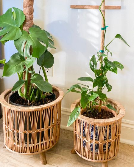 I'm a sucker for a grouping of indoor plants in cute baskets. Linking some of my faves in this and the last two posts! http://liketk.it/36spw #liketkit @liketoknow.it